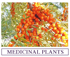 Seeds for Growing Medicinal Plants